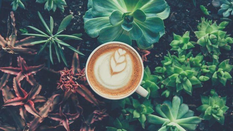 【画像】コーヒーは健康に良い