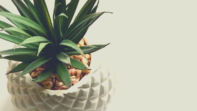 【画像】観葉植物を飾るのをやめた