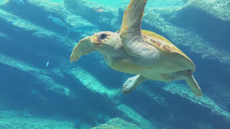 【画像】海洋深層水は栄養が豊富